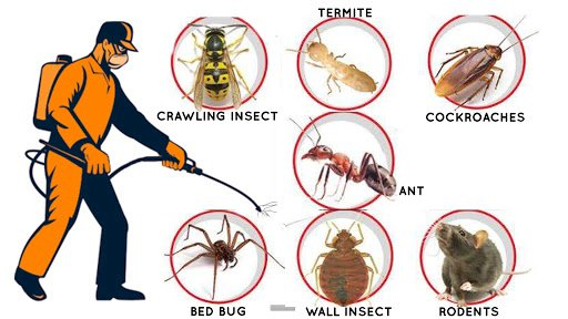 Doorstep pest control service in V.I.P.Road